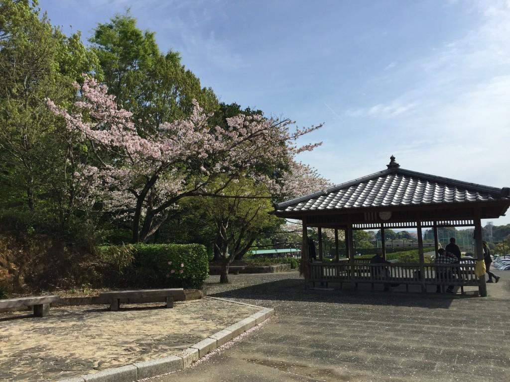 西階運動公園4月9日_7828